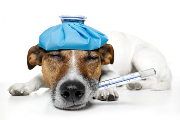 pet-insurance-2